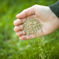 The Case for Overseeding