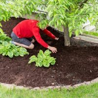Much Ado About Mulch