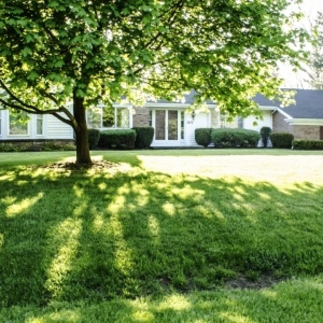 5 LAWN CARE TIPS FOR SHADED AREAS