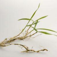 Crabgrass Control 101