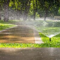 Understanding the Effects of Overwatering