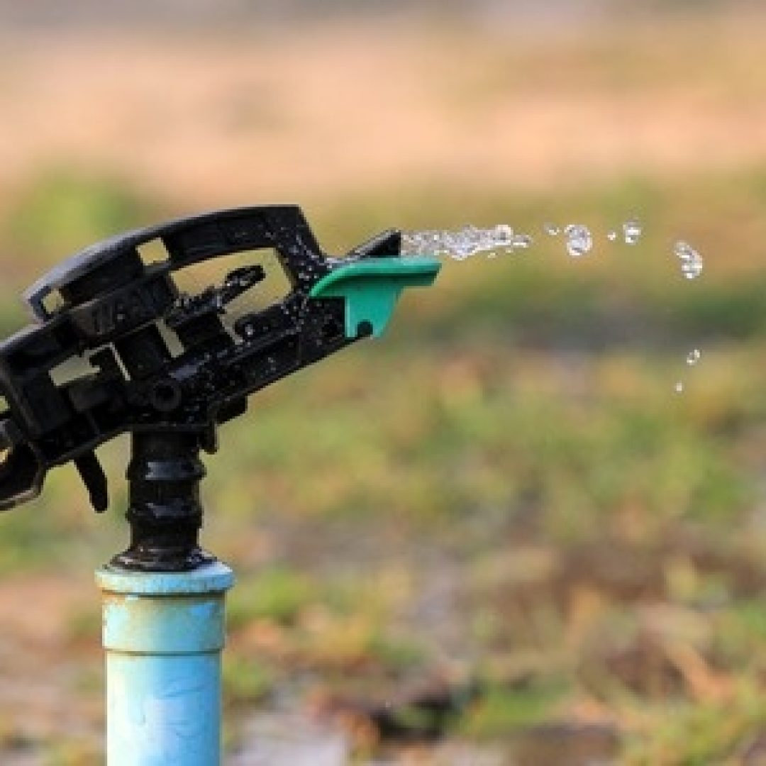 Managing the Effects of a Drought on Your Lawn