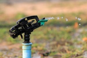 Managing the Effects of Drought on Your Lawn