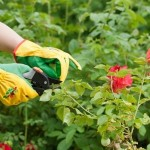 How to Properly Prune Your Garden