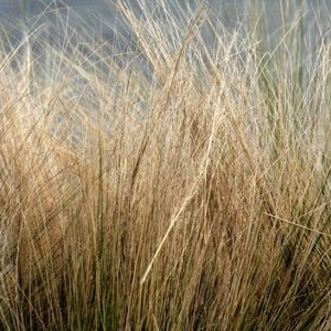 Is Your Grass Dead or Just Dormant?