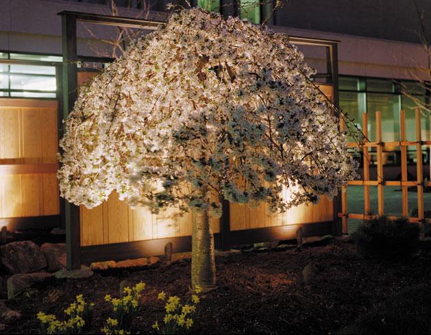 Blossom Tree Lit Up