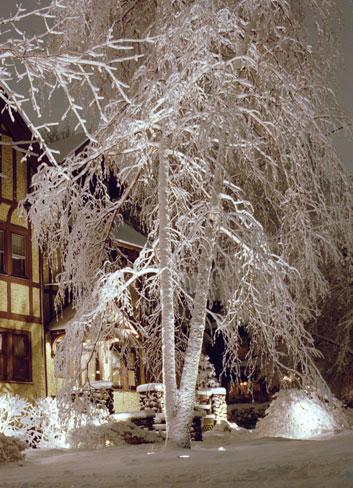 Illuminated Snow Tree
