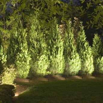 Evergreen Trees lit by Landscape Lighting