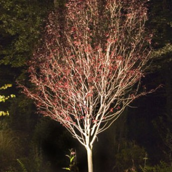 Elegant Landscape Lighting in MA