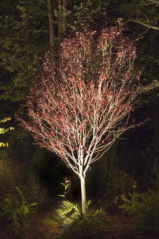 Elegant Landscape Lighting in MA