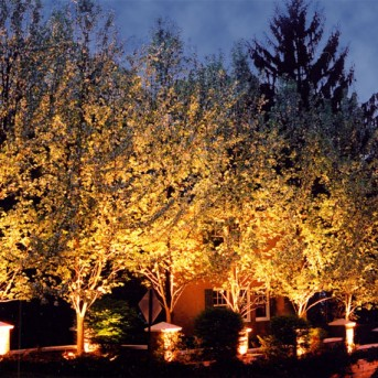 Trees Illuminated with Landscape Lighting