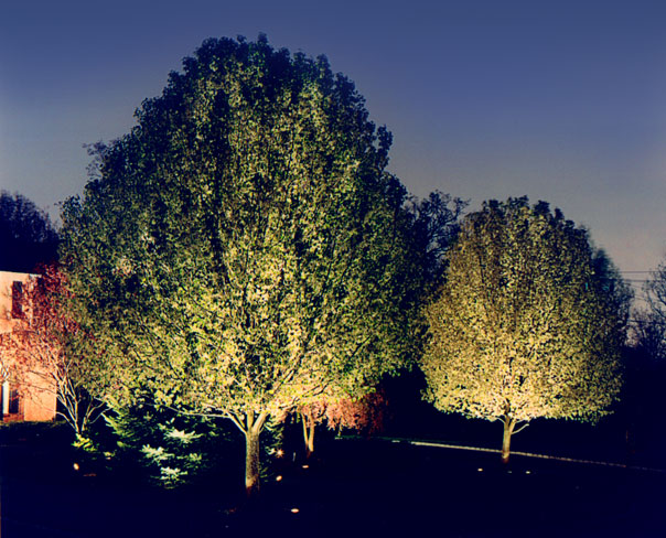 Illuminated Green Tree