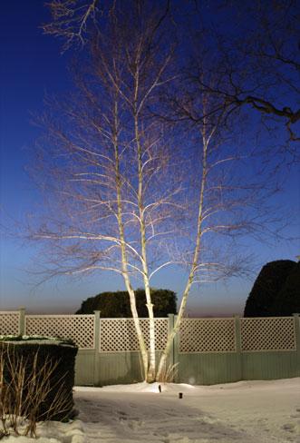Backyard Landscape Lighting in MA