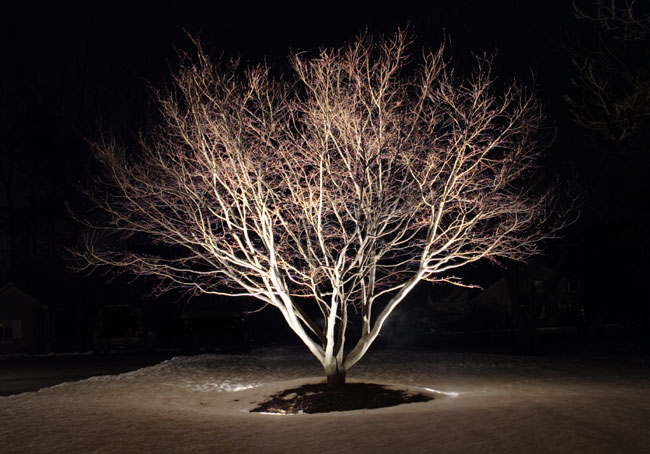 Tree Lit up with Landscape Lighting