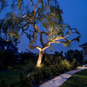 Walkway and Landscape Lighting in Arlington MA