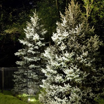 Tree Landscape Lighting in MA