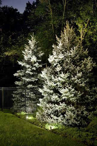 Tree Landscape Lighting in MA