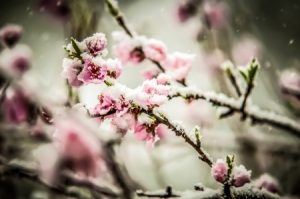 Protecting Your Landscaping From Winter Weather