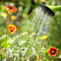 5 Ways to Conserve Water in the Garden