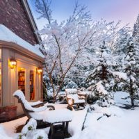 Protecting Trees and Shrubs From Winter Damage