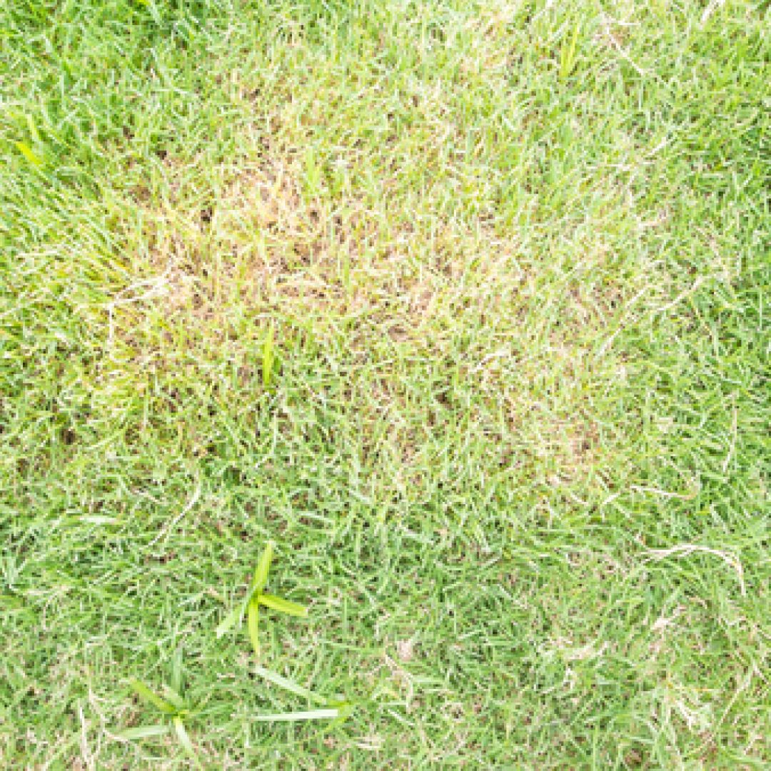Tips For Preventing And Treating Lawn Fungus Suburban Lawn Sprinkler Co