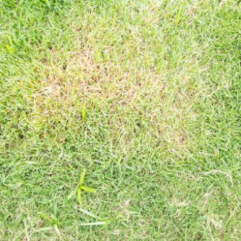Tips for Preventing and Treating Lawn Fungus