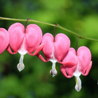 5 Great Plants for Gardening in the Shade