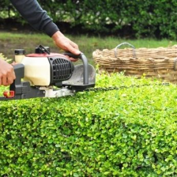 How to Prune Your Hedges Like a Pro