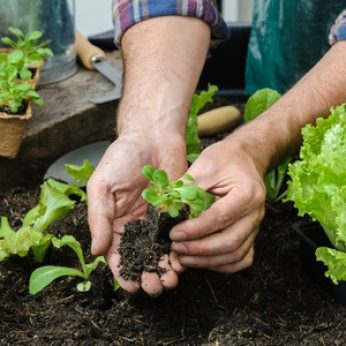 Easy Crops to Plant in Your First Vegetable Garden