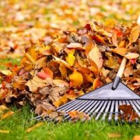 With fall right around the corner, now is the perfect time start thinking about what your lawn might need for the months ahead.