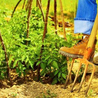 Gardening Season Isn't Over Yet!