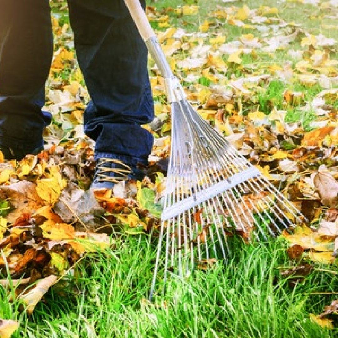 Why Do We Rake Leaves?