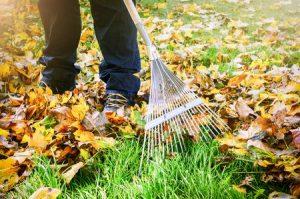 Why Do We Rake Leaves?