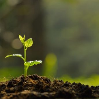How to Care for Seedlings After Germination