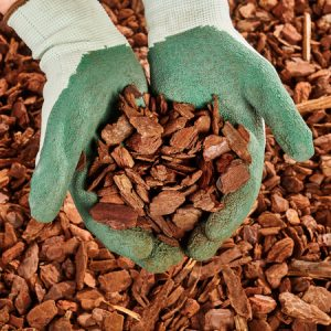 Bark Mulch in the Hnads of a Gardener