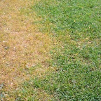Four Things You're Doing that Could Be Killing Your Lawn
