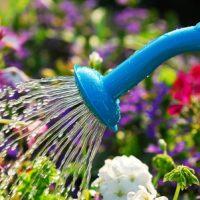 Watering Best Practices for Your Garden