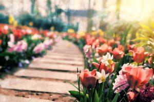 Thriving Garden Under the Summer Sun