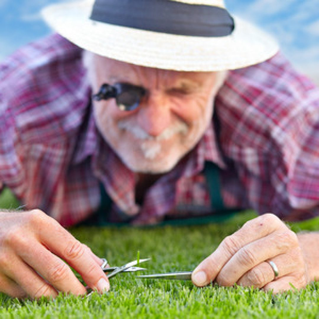 Finding the Right Height for the Grass on Your Lawn