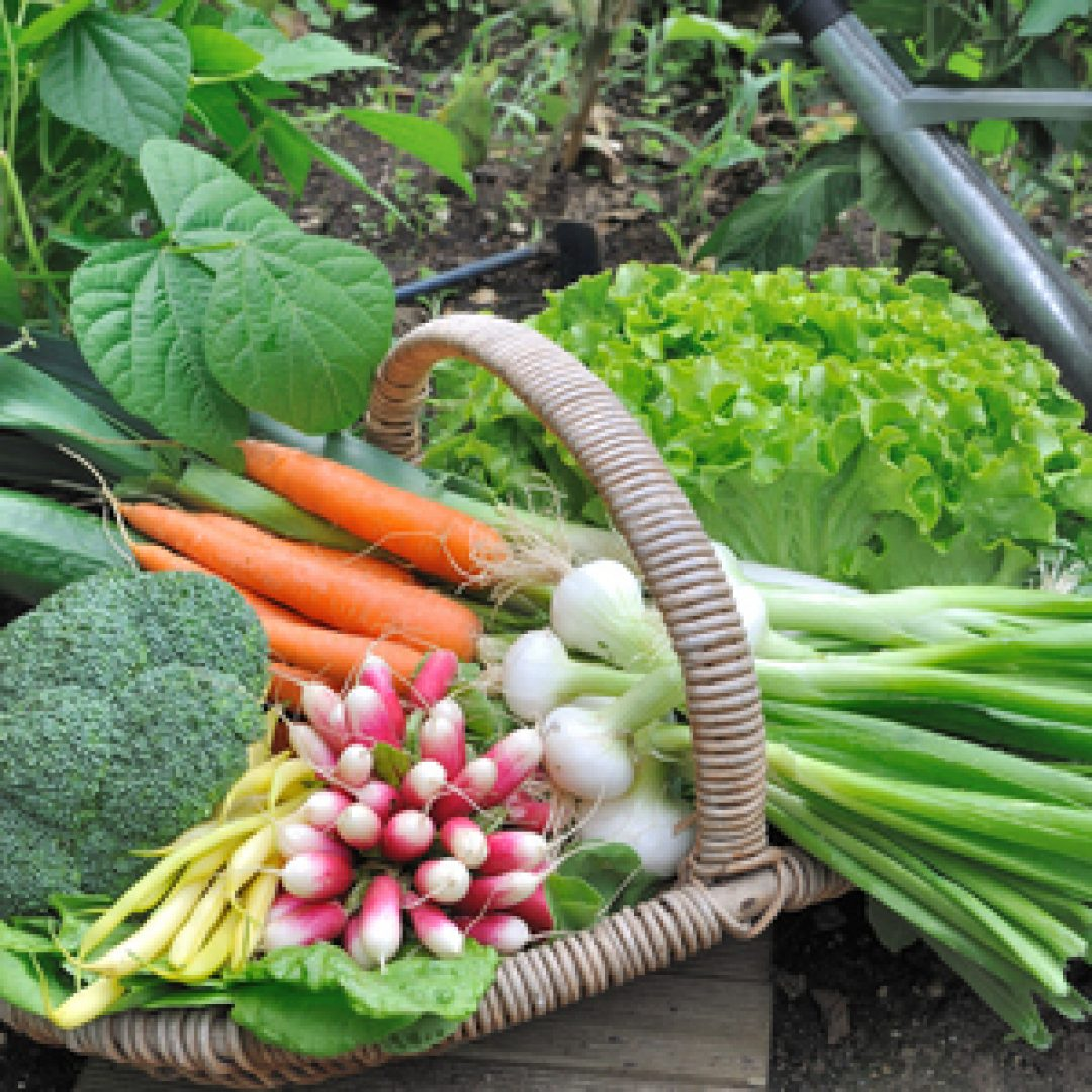 Planning Out Your Vegetable Garden