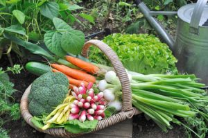 vegetables in a basket grown from a garden