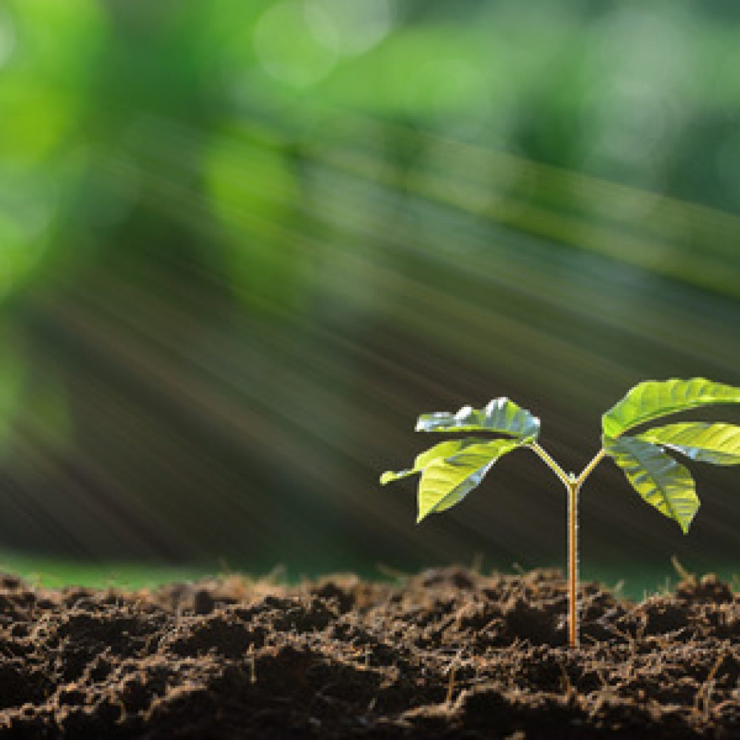 How to Make and Maintain Healthy Soil
