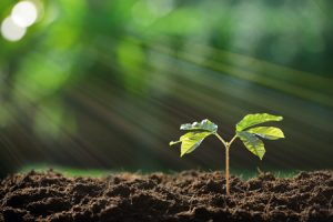 Improve Your Soil's Health