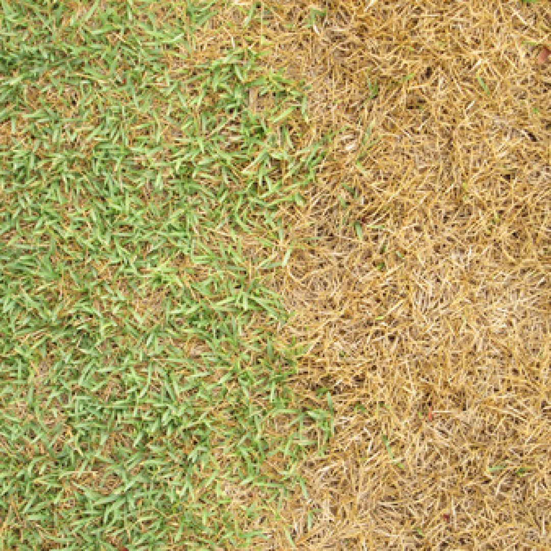 Why Your Grass is Yellow and How to Fix It