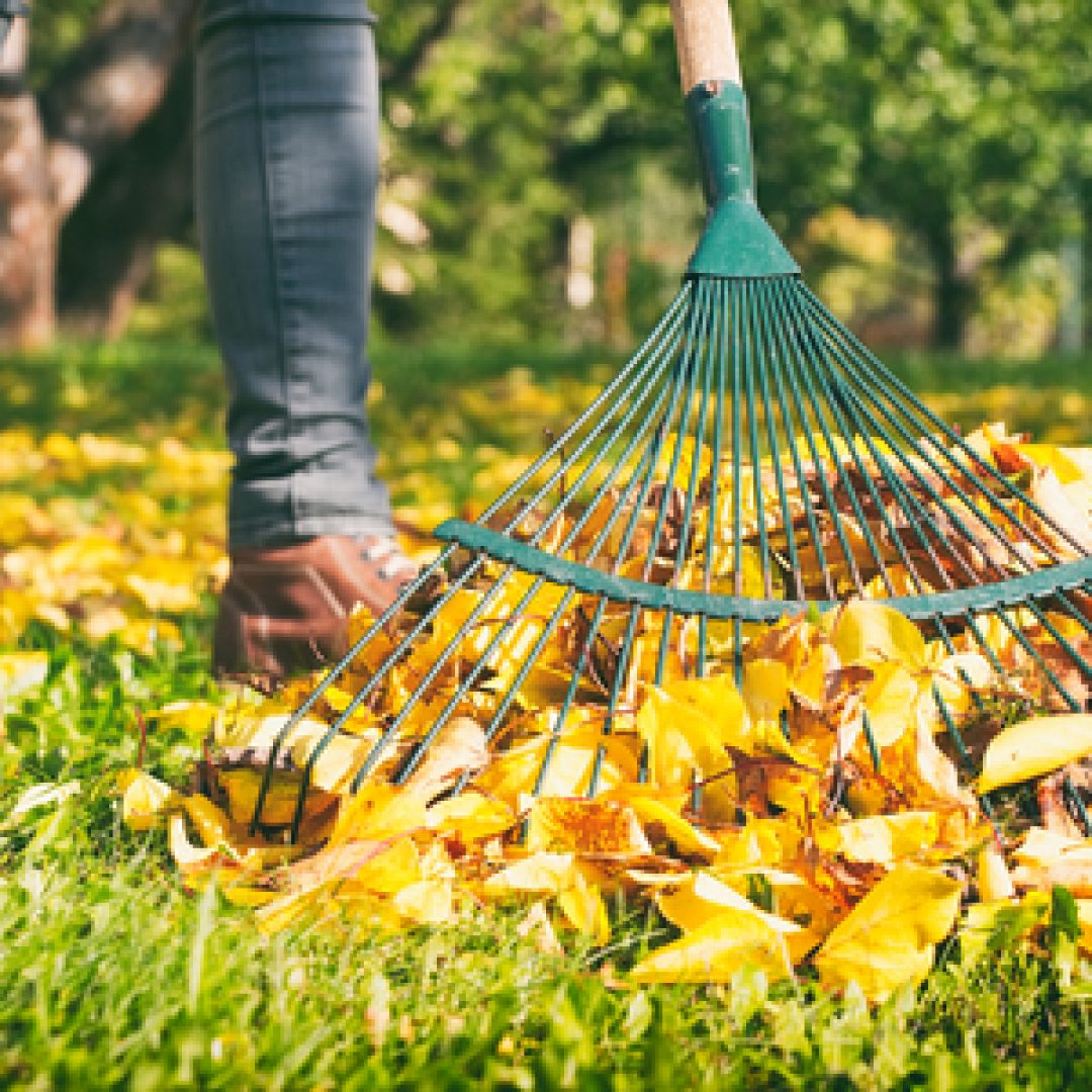 4 Ways You Can Use All of Your Fall Leaves