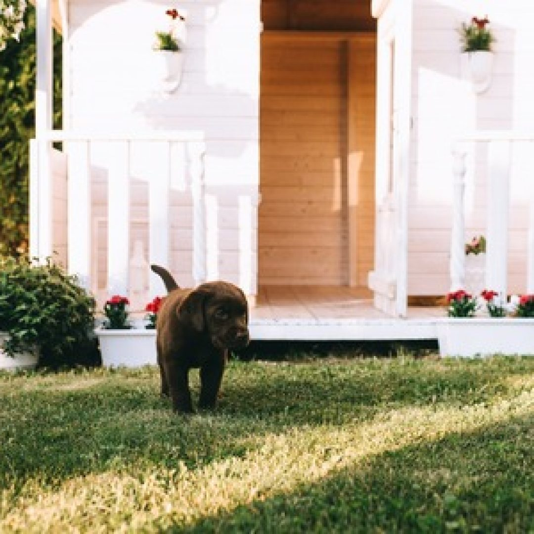 Taking Care of Your Lawn if You Have a Dog