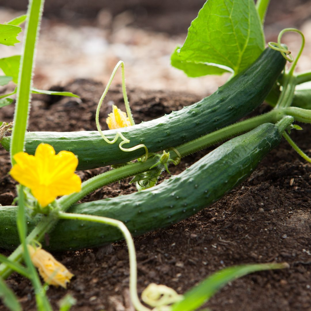 The Healthiest Vegetables to Grow in Your Garden