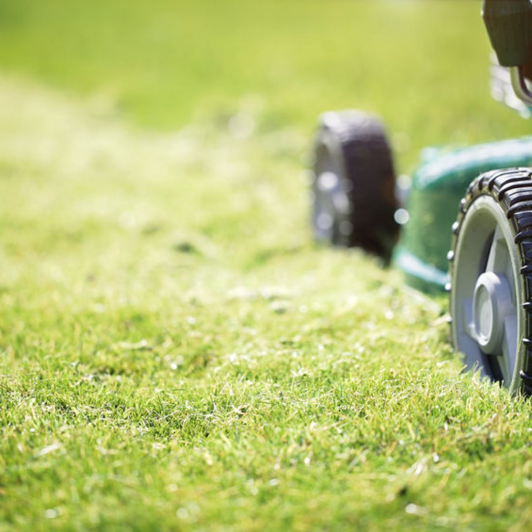 Best Lawn Care Tools of 2020