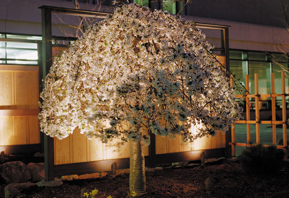 Commercial landscaping lighting