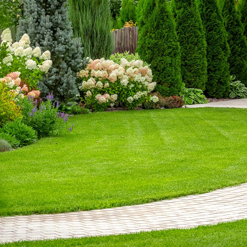 beautiful backyard scene with green grass and flowers